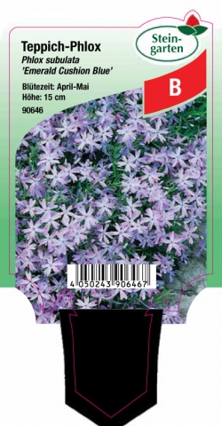 Phlox subulata Emerald Cushion Blue - Teppich-Phlox