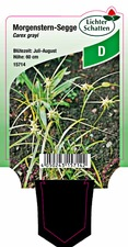 Carex grayi - Morgenstern-Segge