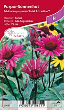 Echinacea purpurea Fatal Attraction® - Staudensonnenhut