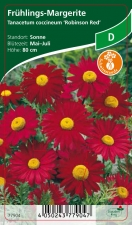 Tanacetum coccineum Robinsons Rot - Frühlings-Margeriten
