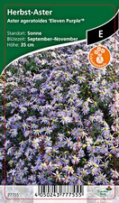 Aster ageratoides Eleven Purple® - Herbst-Astern