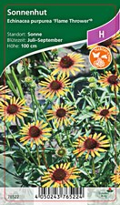 Echinacea purpurea Flame Thrower® - Staudensonnenhut
